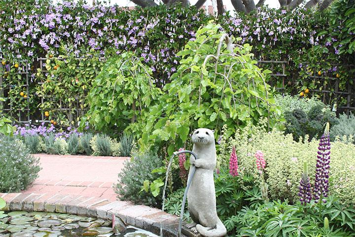 Shermie-in-Sun-Garden